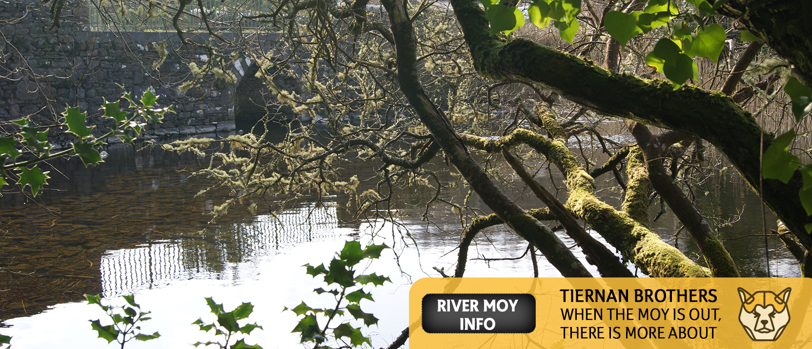 River-Moy-Information